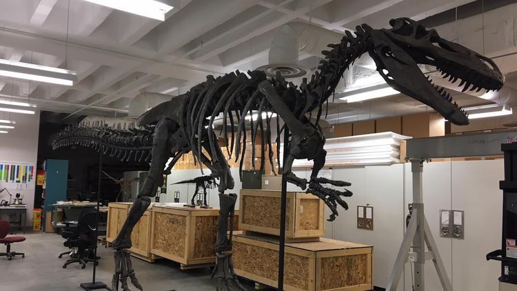 Unique Dinosaur Coming To Museum Center Cincinnati Business Courier