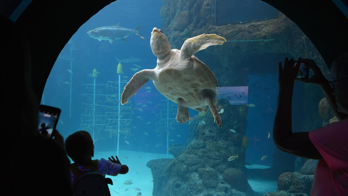 Florida Aquarium adds Tim Binder to its team - Tampa Bay ...