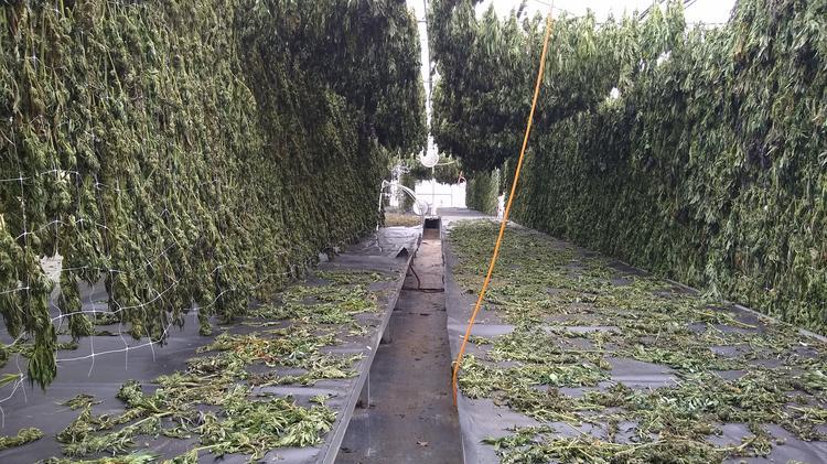 Oregon hemp rush raises questions about market's future