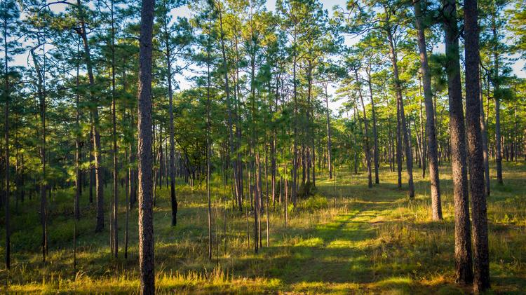 1,913-acre Twin Oaks Plantation near Thomasville is listed