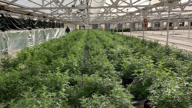 CBD investor and Cannuka owner Green Light Acquisitions