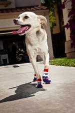 The cutest company in Silicon Valley: 80,000 grippy dog sock sets sold