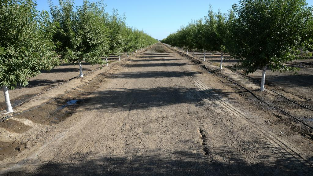 Yolo ag land sold for $4 million, to be converted into orchard