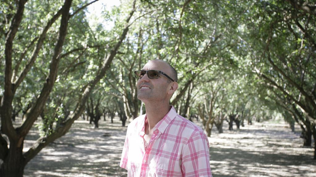 How almonds took over Yolo County's farm fields