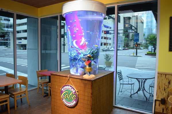 Tropical Smoothie Cafe Tampa Fl