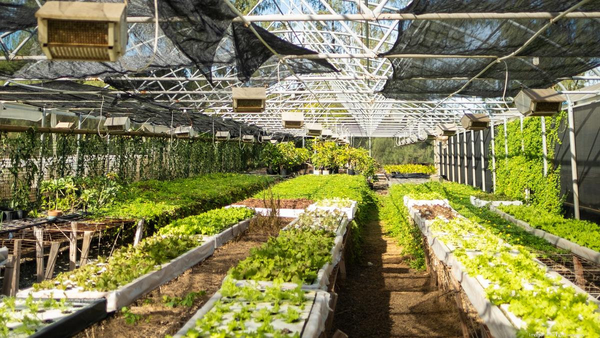 Hawaii farmers set to see more than $2M in federal support - Pacific Business News