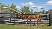 No. 9: Wellington This Palm Beach County city is known for its equestrian lifestyle. It has grown 4.4 percent from 2008 to 2011 and has a median household income of $78,268.
