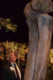 Jerry Cook, president of the Overland Park Convention & Visitors Bureau, checks out the hind leg of a supersaurus vivianae.