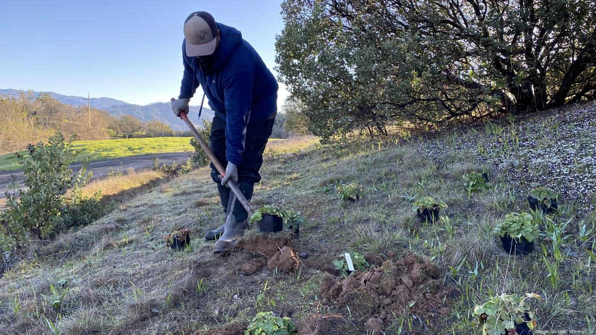 Healdsburg's Jordan Winery turns butterflies and bees into a business opportunity - San Francisco Business Times
