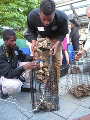 Students from Digital Harbor High School fill a cage with oysters. The students will help maintain the oyster gardens during the rest of the school year.