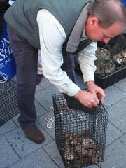 John Rodenhausen, Maryland director of development for the Chesapeake Bay Foundation, latches an oyster cage.