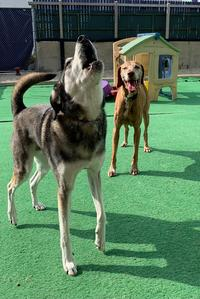 Doggy day care, Badger Truck Center face possible relocation for I-94 project in Milwaukee