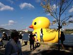 Duck to be moved, cleaned Monday (Video)