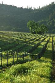Chatom Vineyards and Winery, near San Andreas and Murphys, is on the market for $6.95 million. The vineyards are 12 miles away from the winery.