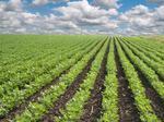 FarmLink's new platform evens playing field for farmers