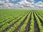 Missouri fines farmers $145,125 over misuse of herbicide