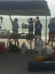 Scenes from Madeira Beach where a sick sperm whale beached itself Thursday morning.