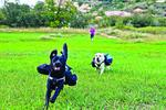 Eating doggone fast: Slo-Bowl lowers speed