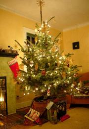 Trees sold by Portland-based The Original Living Christmas Tree Company fit snugly both in the home and, once the season is over, outside of it.