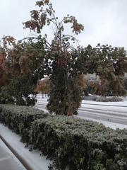 Ice downs tree branches on Windhaven Parkway in The Colony.