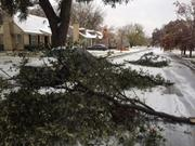 The ice on trees broke some limbs off this tree on Winton Street in Dallas.