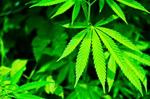 Pot is not on the agenda at site selectors conference in Denver