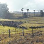 Parker Ranch files lawsuit against German industrialist's 3,500-acre purchase