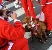 There weren't any real reindeer in evidence at San Jose's Santa Run, but there were some four-legged participants with antlers.