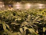 Marijuana grow systems maker opening Denver area distribution center
