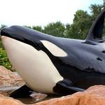 SeaWorld 2Q profit down significantly; still navigating troubled waters despite new leadership
