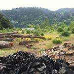 Oregon taps <strong>wood</strong> energy experts to tackle forest health