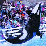 Capacity crowd attends SeaWorld concert in Orlando