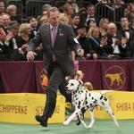 Westminster Kennel Club lets mutts in the door