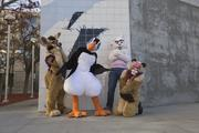 A cougar, a puffin, a samoyed and a fennec get a breath of fresh air outside the convention center.