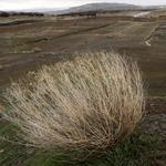 Feinstein wants to protect Mojave Desert despite Congress