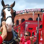 Cardinals playoff games to have big impact on economy