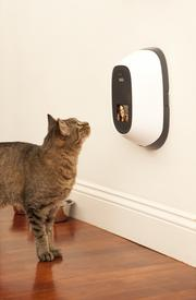 The PetChatz device plugs into a wall outlet and wirelessly connects to the Internet. A special ringtone lets the pet know you're calling.