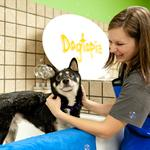 Dogtopia pawing its way into the Chicago market