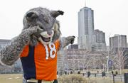 """University of Colorado Denver, www.ucdenver.edu -- """"Here are our Super Bowl pix taken with our University of Colorado mascot Milo the Lynx on the Auraria Campus.  He's still brand new 'born' and introduced to the campus February 2013.  The Milo name was created by a student: 'Mi' for Mile High; 'Lo' for Lower Downtown.  And, he's proud to live right across the highway from Sports Authority Field at Mile High, home of the Super Bowl-bound Denver Broncos. These photos show his excitement, dressed in a Broncos jersey [and] generating enthusiasm all across the Auraria Campus. This photo:  Milo gives his best Mile Hig Salute, with the Four Seasons in the background."""" -- Marcia Neville, Media Relations & Community Engagement"""