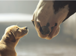 Clio Awards invents new prize for best Super Bowl spot