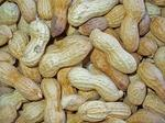 Nuts to you: Stanford researchers crack open new therapy for peanut allergies