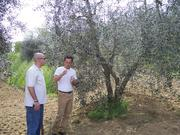 DLM associate Scott Achs and Alex Zanetti, DLM's importer of olive oil, check out the olive groves that produce the Vera Jane line or extra virgin olive oil in Italy.