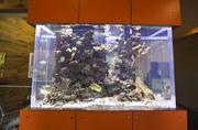 A giant fish tank is one of the first features to great visitors to the Santa Cruz headquarters of Plantronics.