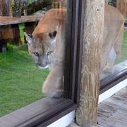 Neiko keeps his balance as he strolls along the ledge of the observation window.