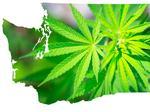 Feeling lucky? Washington's retail marijuana lottery kicks off this week