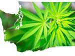 Marijuana lottery: Winners and losers in Seattle