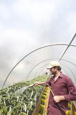 Fertile ground: Local food movement hooking shoppers