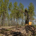 SBO: New OSU research shows tree scraps can be used in energy storage devices