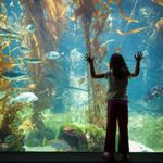 AquaJax evaluating two Downtown Jacksonville sites for aquarium, preparing for fundraising campaign