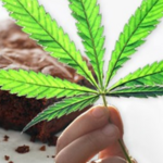 Harvard-MGH study shows that pot smoking causes ... dude, um, what were you saying?